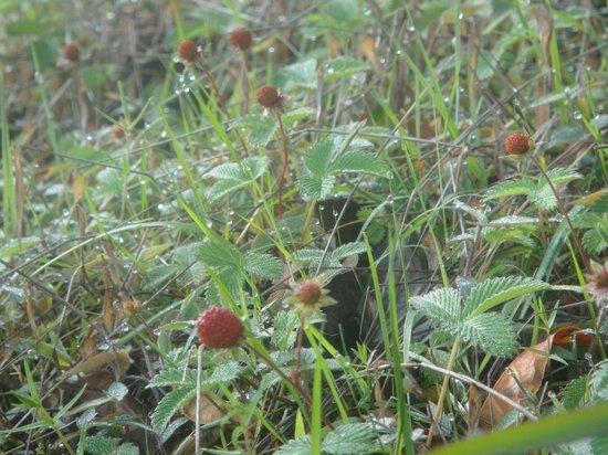Sterling Darjeeling: Flora & Fauna