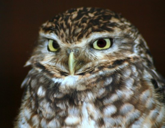 Kirkleatham Owl Center:                   I'm watching you!!