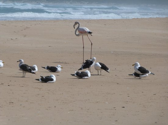 Oyster Bay Lodge:                   The strangest flamingo in the world!