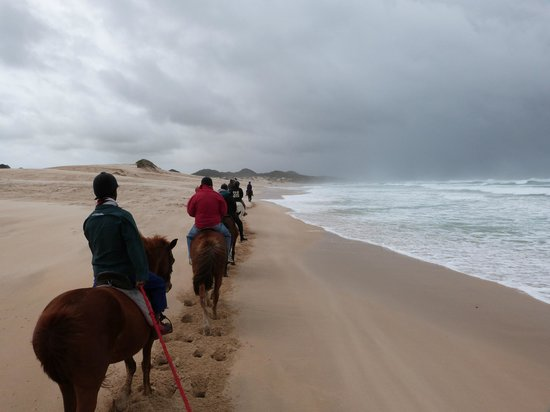 Oyster Bay Lodge:                   Horse rides on the beach