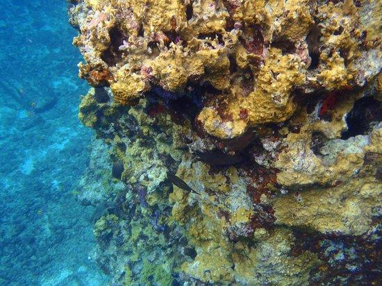 Coral Princess Golf & Dive Resort:                   coral along wall