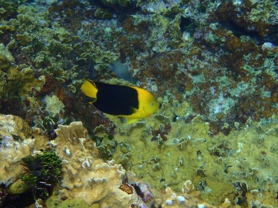 Coral Princess Golf & Dive Resort:                   fish along wall