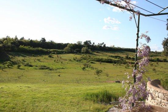 Domaine de la Blaque : vue du champs de la chambre Menhir