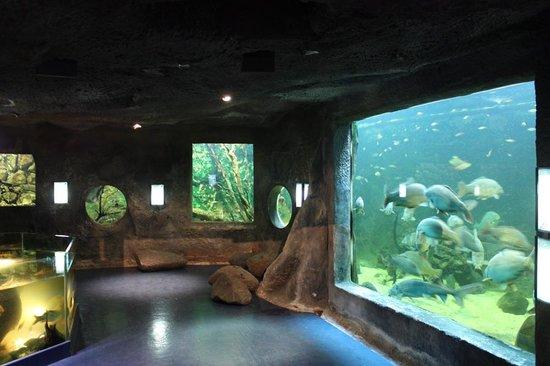 Aquarium De Pescalis