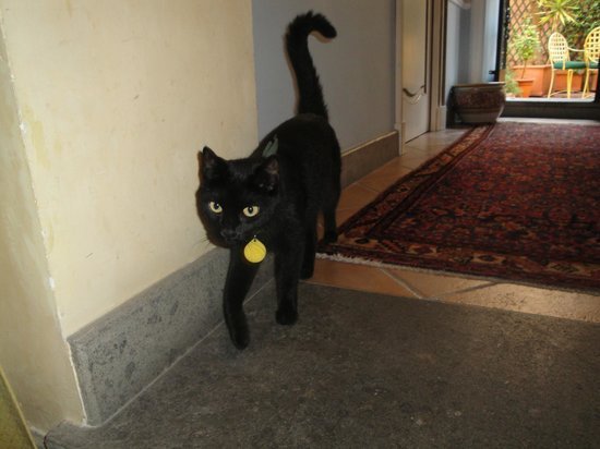 Hotel Bramante:                   La gatta del vicino: affabile e curiosa