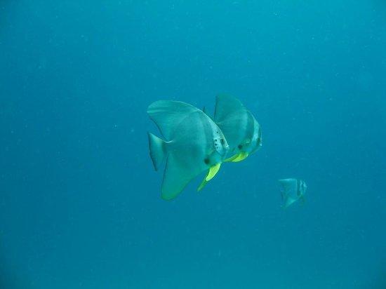 Calypso Diving: Unterwasserwelt