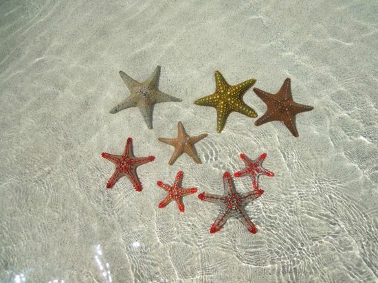 Sand Island Beach Cottages:                                     Starfish Island