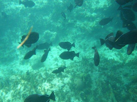 Alexandra Resort:                   Snorkeling....