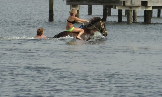 Bradenton, FL:                   Holding on to tail and being pulled.  So much fun