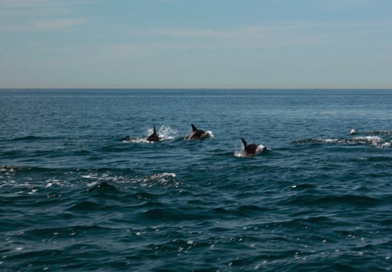 Costa Boat Charters:                   the dolphins
