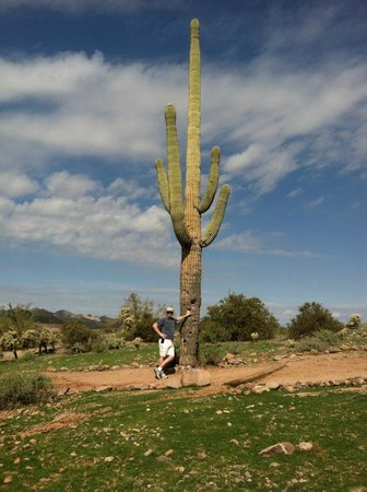 Lost Dutchman State Park: cactus as high as 50' in the valley!! amazing
