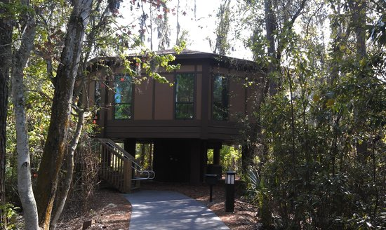 Treehouse Villa Picture Of Disney S Saratoga Springs