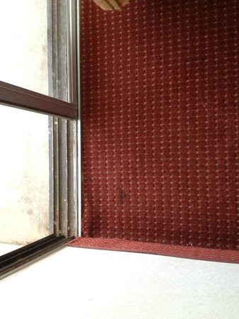 Motel 6 Tucson Airport:                                                                         Dirty carpet in room, ma