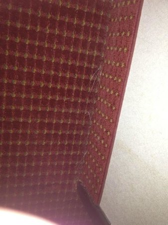 Motel 6 Tucson Airport :                                                                         Raggedy carpet, dirty, c