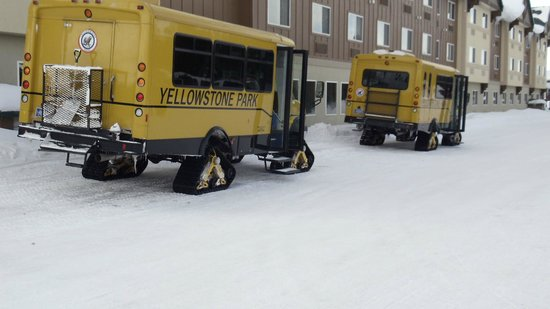 Gray Wolf Inn and Suites :                   Snow Coach pickup right outside the lobby