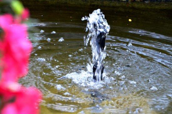 Costa Vella Hotel: fuente en el jardin