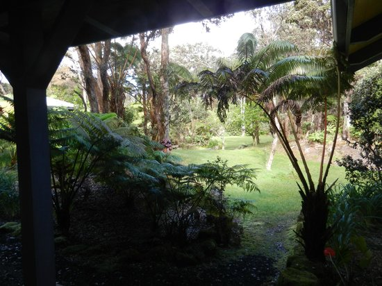 Kilauea Lodge:                   View from outside our room to the rear garden
