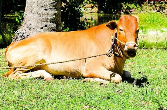 Marari Beach Resort:                   Lawn mower