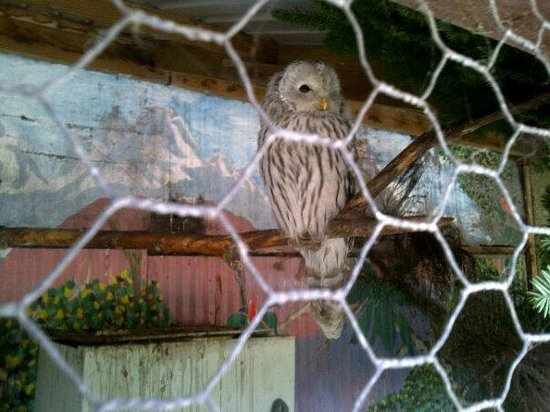 Auchingarrich Wildlife Centre:                   owl