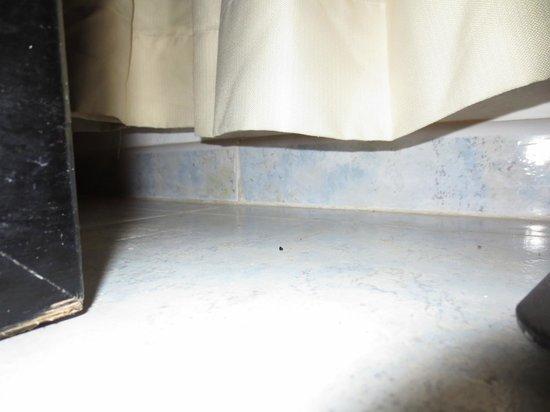 Sirenis Punta Cana Resort Casino & Aquagames:                   Des crottes de souris derrière le lit