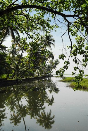 Coconut Lagoon :                   The lake