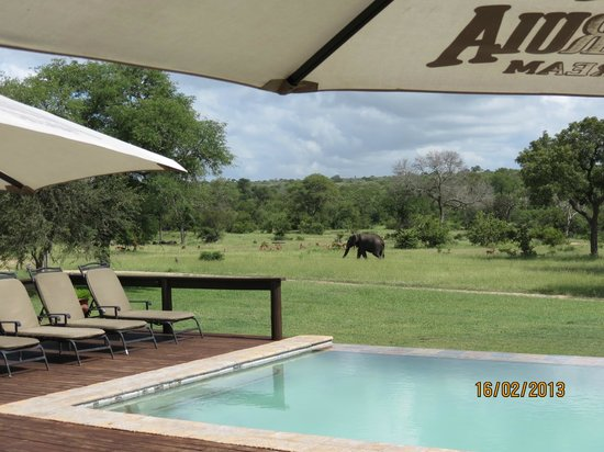 Nkorho Bush Lodge:                   Fabulous views from the lodge of visiting wildlife.
