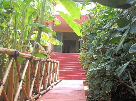 Casa Hamaca Guesthouse: jungle entrance
