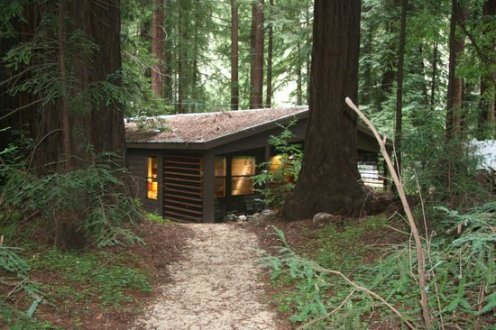 Glen Oaks Big Sur:                   Forrest View Cabin