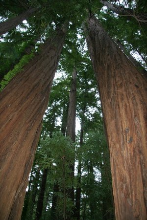 Glen Oaks Big Sur :                   Redwood Forrest