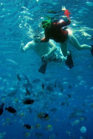 Aston Waikiki Beach Hotel:                   swimming with fish