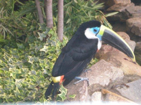 Pumapungo Museum and Arqueological Park - MCYP:                   Aviary