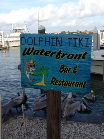 Dolphin Tiki Bar And Cafe Marina Marco Island