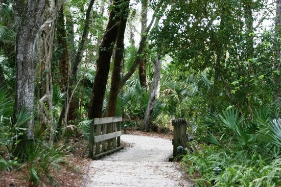 Koreshan State Historic Site:                   Nature trail