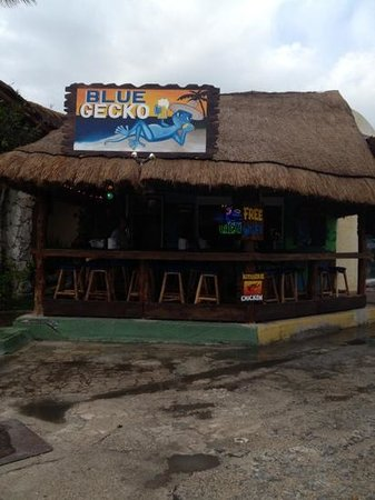 Blue Gecko Cantina:                   great little place and the price is right!