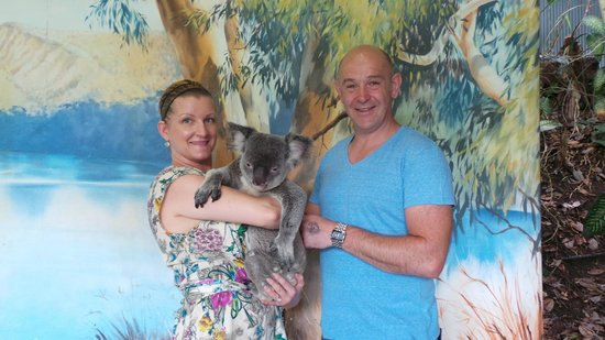 Shangri-La Hotel, The Marina, Cairns:                   Kuranda - Koala Gardens
