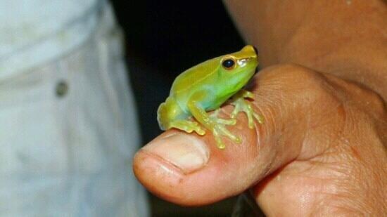 Bungalows Luna y Monte :                   Green Frog