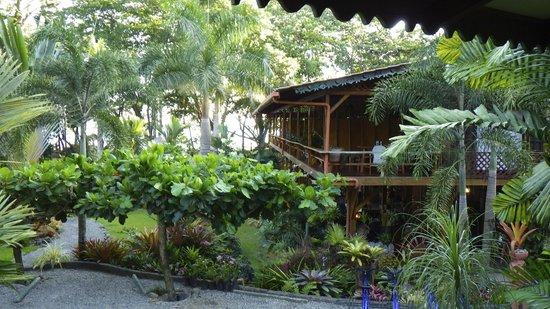 Hotel Banana Azul:                   From our balcony