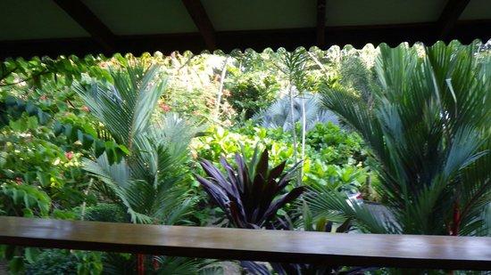 Hotel Banana Azul:                   From balcony