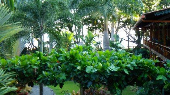 Hotel Banana Azul:                   Grounds