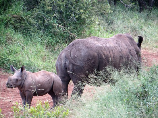 Rhino River Lodge:                                     Another mum and baby