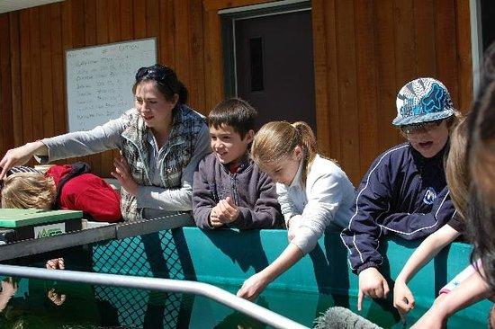 Quatse Salmon Stewardship Centre: Coho fry nibble fingers