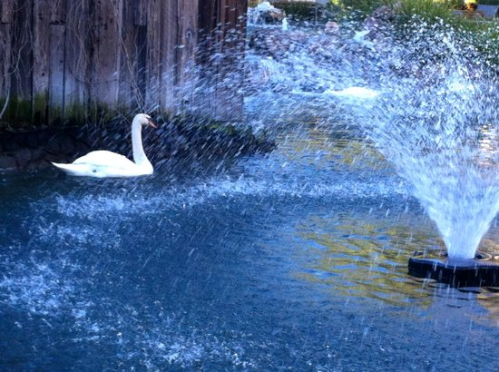 Embassy Suites by Hilton Napa Valley:                   Fountain with swan in the pond
