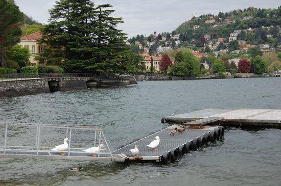 Lake Como:                   コモ湖