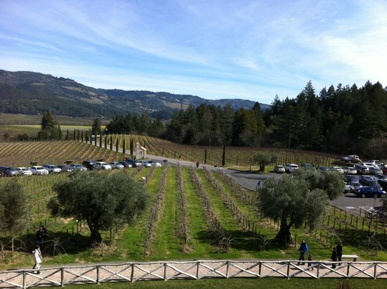 Castello di Amorosa:                   The view from the castle out to the vineyards