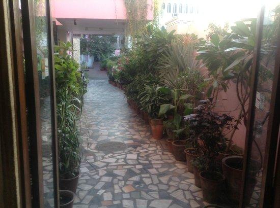 Hotel Pearl Palace:                   driveway