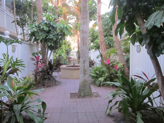 Tortuga Beach Resort:                   outside our patio