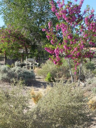 Chocolate Turtle Bed and Breakfast: Spring in the desert at the Turtle