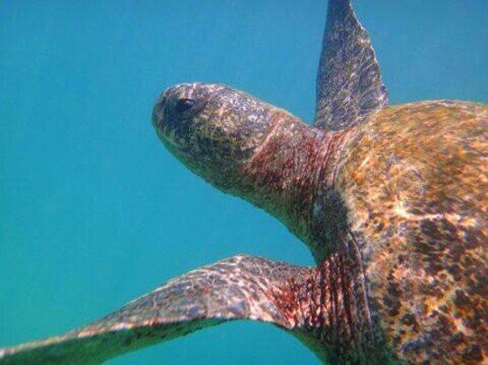 Concha de Perla: Amiga marina