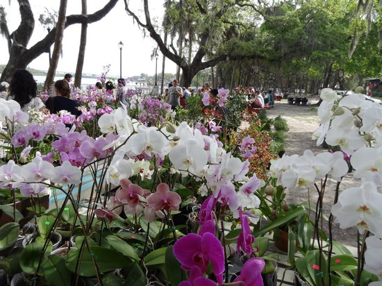 Wat Mongkolratanaram Thai Temple: Orchid sale on the bank of the Palm River