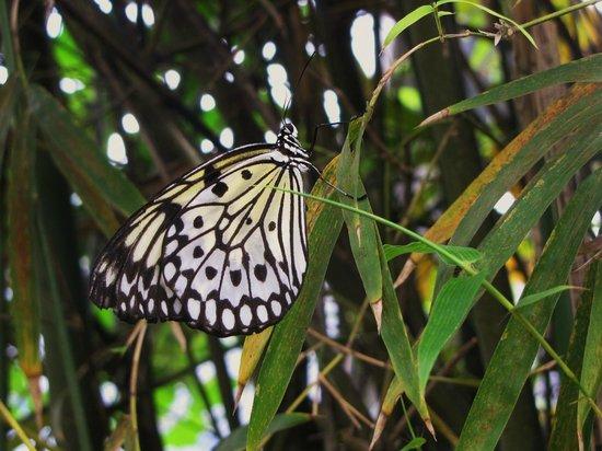 Butterfly World :                   Serre papillons